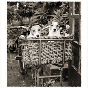 Hobbe and Doody in basket card