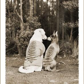 Janie & Thylacine card