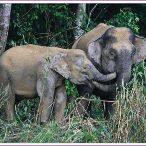 elephants feeding card