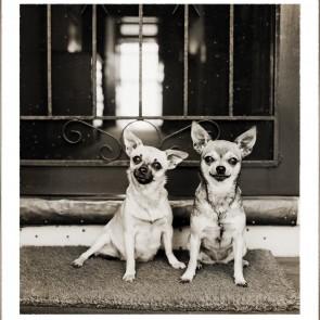 Chihuahua Sisters