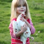 Poppy and hen