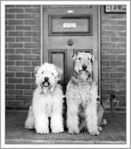baxter and oakleigh card