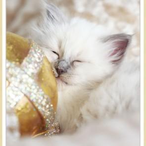 Christmas kitten#