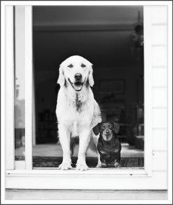 Mishka and Elsie card