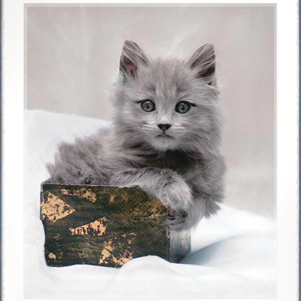 Little Grey Paw